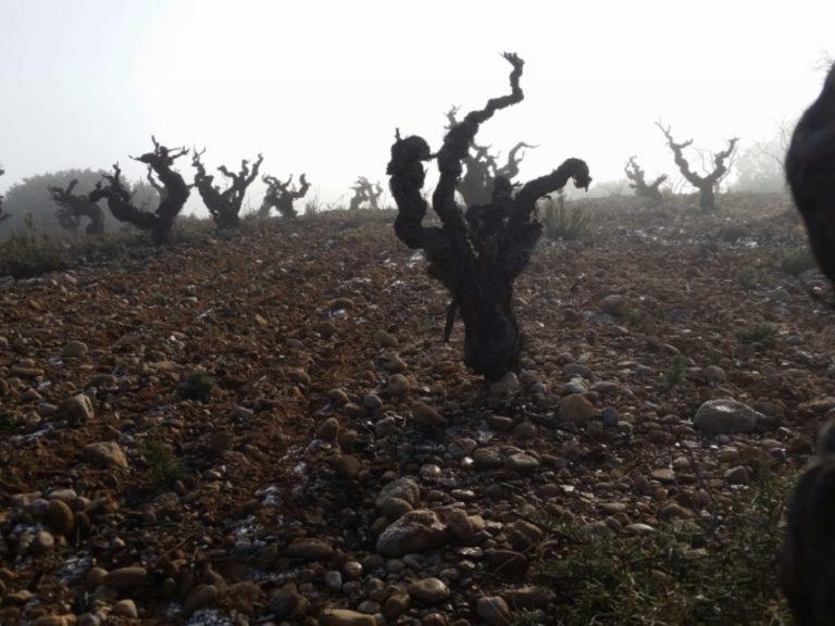 la-comarcal-viticultores-02