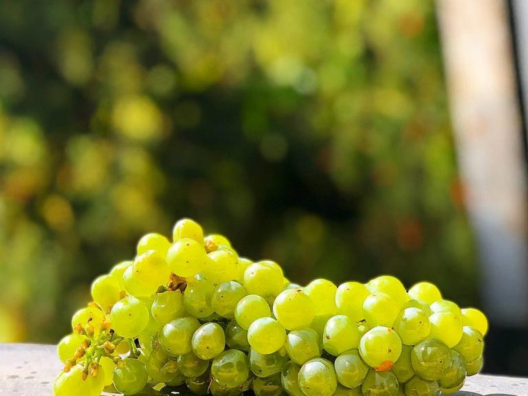 coppola-winery-04