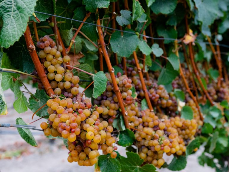 coppola-winery-11