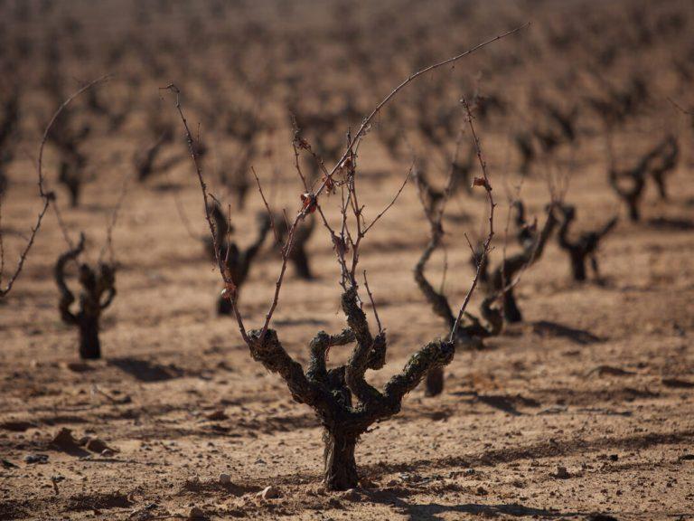 Enrique Mendoza Winery